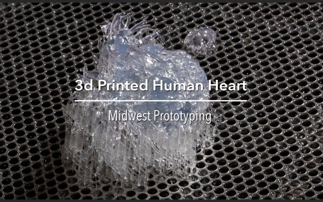 TIME LAPSE + HUMAN HEART + 3D PRINTER